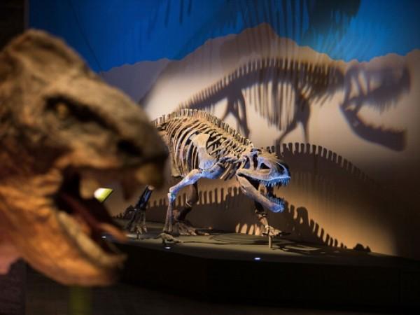 Dinosaur Exhibit
