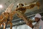 'Jurassic Duck' was Largest Carnivorous Dinosaur