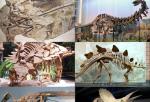 Examples of Dinosaur Fossils