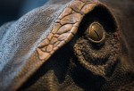Dinosaurs: Dawn To Extinction Exhibition Opens To The Public