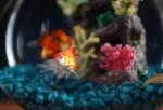 Nat Geo WILD's Fish Bowl