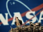NASA Prepares For Final Launch Of Space Shuttle Endeavour