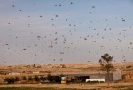A Swarm Of Locusts Arrives In Israel