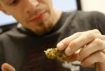Budtender Cody Blake handles marijuana at Perennial Holistic Wellness Center, a not-for-profit medical marijuana dispensary.