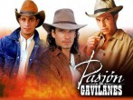 Pasion de Gavilanes is kind of super awesome.