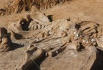 '60,000-Year-Old' Mammoth Skeleton Found in North Texas